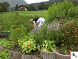 large herb and vegetable garden